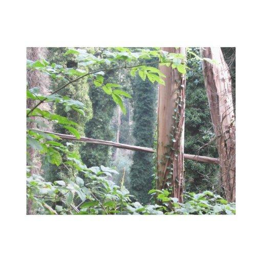 Cena da floresta impressão de canvas envolvida