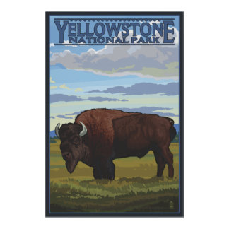 Cena do bisonte - parque nacional de Yellowstone Pôster