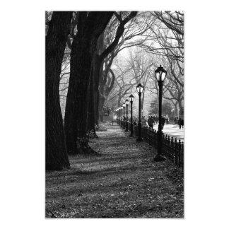 Central Park na Nova Iorque Impressão De Foto