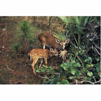 Cervos chaves fotoesculturas