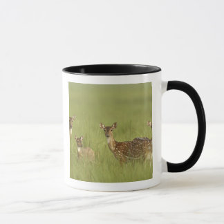 Cervos de Chital e novo, nacional de Corbett Caneca