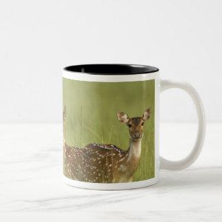 Cervos de Chital e novo, nacional de Corbett Caneca De Café Em Dois Tons