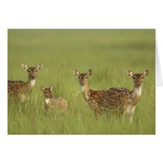 Cervos de Chital e novo, nacional de Corbett Cartão Comemorativo