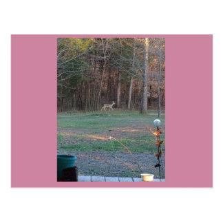 Cervos em uma caminhada cartão postal