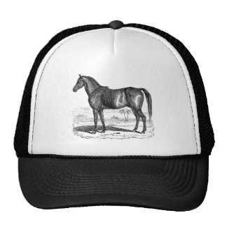 Chapéu do boné do cavalo do país do vintage