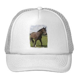 Chapéu do cavalo do puro-sangue bone
