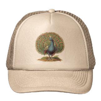 Chapéu do pavão do vintage… boné