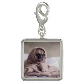 Charms Com Fotos Cão de filhote de cachorro do Pug que afaga em uma