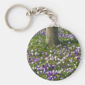 Chaveiro Açafrões do campo de flores na grama do primavera