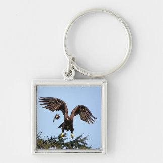 Chaveiro Descolagem juvenil da águia americana