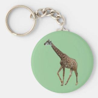 Chaveiro Girafas e árvores, 长颈鹿. Fotografia do jardim