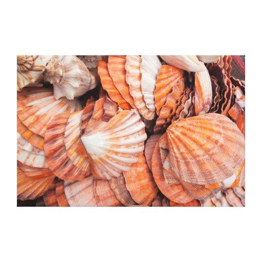Chaves de Florida, Key West, seashells Impressão Em Tela Canvas