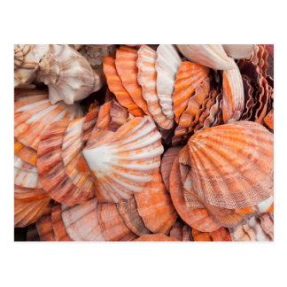 Chaves de Florida, Key West, seashells Cartão Postal