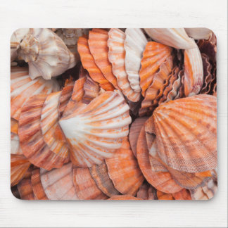 Chaves de Florida, Key West, seashells