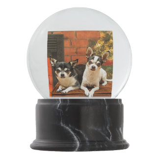 Chihuahua do Natal