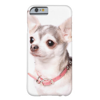 Chihuahua fêmea com colar cor-de-rosa capa barely there para iPhone 6