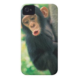 Chimpanzé novo (troglodytes da bandeja) capinha iPhone 4