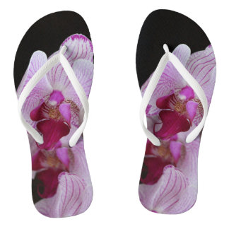 Chinelos da orquídea