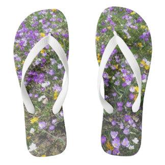 Chinelos O multi primavera do açafrão da cor floresce