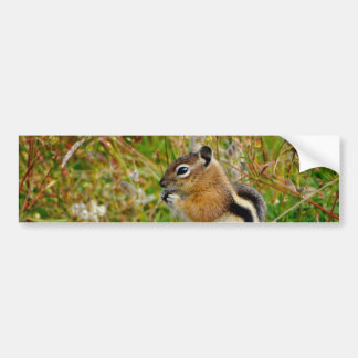 Chipmunk bonito carnudo sobre no coto de madeira adesivo para carro