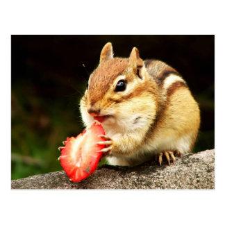 Chipmunk carnudo bonito com morango cartão postal