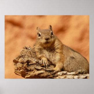 Chipmunk engraçado que encontra-se em uma rocha posters