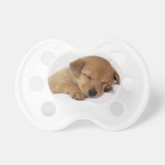 Chupeta Filhote de cachorro bonito de Labrador