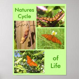 Ciclo das naturezas da vida pôster