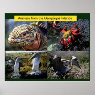 Ciência, animais dos Galápagos Posteres