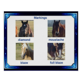 Ciência, animais, marcações do cavalo posters