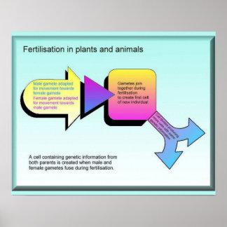 Ciência, fecundação nos vegetais e animal poster