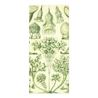 Ciliata de Ernst Haeckel 10.16 X 22.86cm Panfleto