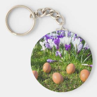 Cinco ovos fracos que encontram-se perto dos chaveiro