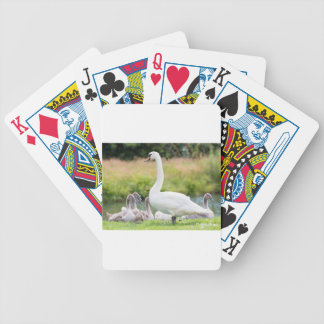 Cisne branca da mãe com pintinhos novos baralho para poker