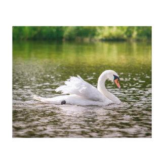 Cisne branca em um lago impressão em canvas