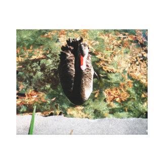 Cisne preta impressão em tela