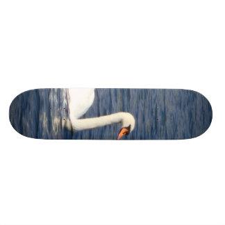 Cisne Skateboard