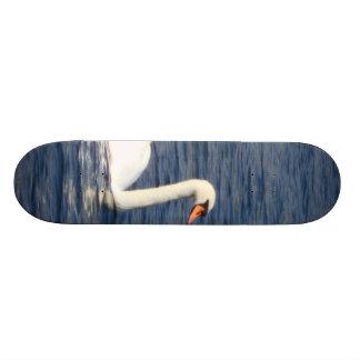 Cisne Skate
