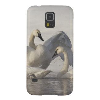 Cisnes de trompetista no rio de Madison no inverno Capas Par Galaxy S5
