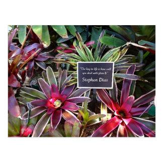 Citações de Stephen Dias do jardim botânico de Cartão Postal