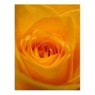 Close up do rosa amarelo cartão postal
