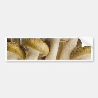Close up dos cogumelos da faia de Brown Adesivo Para Carro