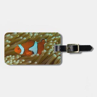 Clownfish no grande recife de coral etiqueta de mala