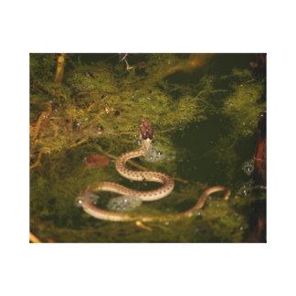 Cobra do bebê da natação