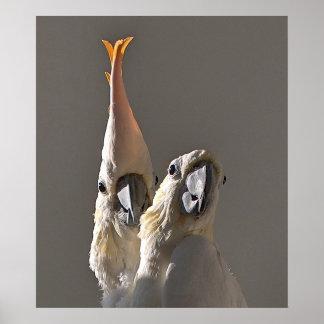Cockatoos salvados posters