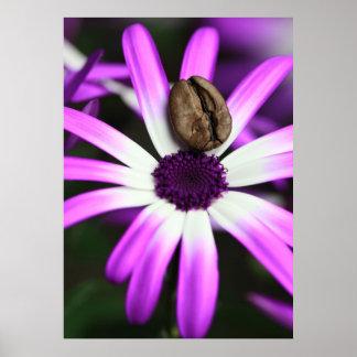Coffee Flowers Pôsteres