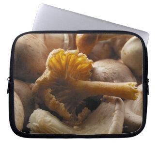 Cogumelos de ostra, cogumelos de shiitake, capa para computador