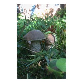 Cogumelos Papelaria