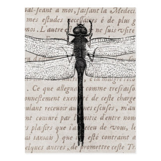 Colagem da libélula do vintage e do texto da cartão postal