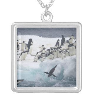 Colar Banhado A Prata A Antártica, ilha de Paulet. Pinguins de Adelie